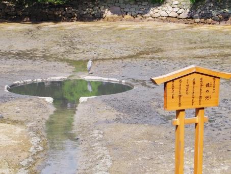 厳島神社鏡の池4
